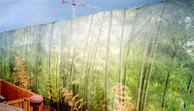 A large banner printed to look like a bamboo forest mounted on a large fence
